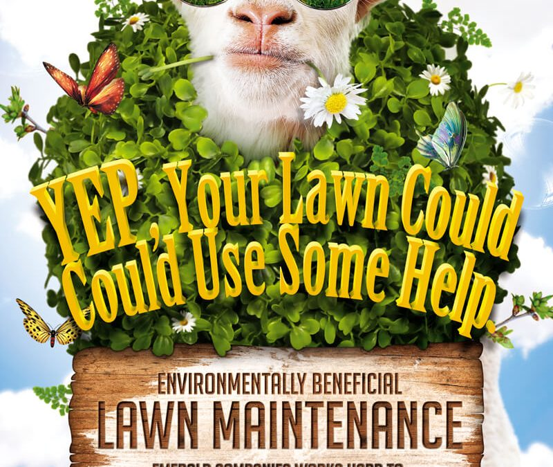 Environmentally Benefical Lawn Maintenance